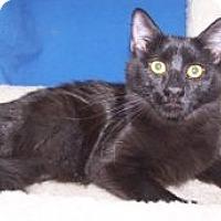 Adopt A Pet :: K-Alice1-Calypso - Colorado Springs, CO