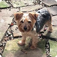 Adopt A Pet :: Macy - Lancaster, TX