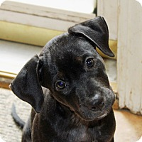Adopt A Pet :: Toby - PENDING, in Maine - kennebunkport, ME