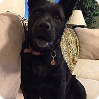 Adopt A Pet :: Spirit - Meridian, ID