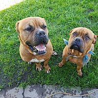 Adopt A Pet :: Dory - Marina del Rey, CA