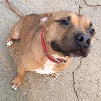 Adopt A Pet :: Austin - Munford, TN