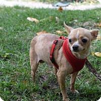 Adopt A Pet :: Julian - Boca Raton, FL