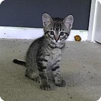 Adopt A Pet :: Camilla - St. Charles, MO