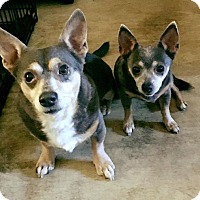 Adopt A Pet :: Jessie - Warner Robins, GA