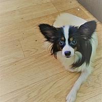 Adopt A Pet :: Yancey - conroe, TX