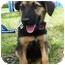 Photo 2 - Shepherd (Unknown Type) Mix Puppy for adoption in Detroit, Michigan - Vanna-Pending