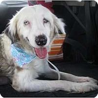 Adopt A Pet :: Virginia - Madison, WI