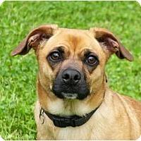 Adopt A Pet :: Rico - Mocksville, NC