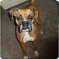 Adopt A Pet :: Caleigh - Jacksonville, FL