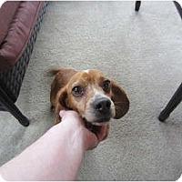 Adopt A Pet :: Elizabeth - Alexandria, VA