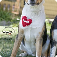 Adopt A Pet :: KODA - Inland Empire, CA
