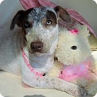 Adopt A Pet :: Kiku - Aurora, CO