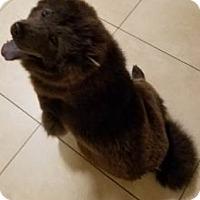 Adopt A Pet :: Julia - Mansfield, TX