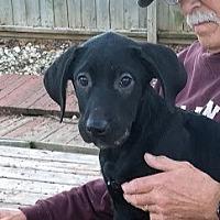Adopt A Pet :: Sweetie - Barrington Hills, IL