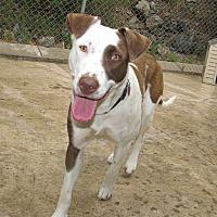 Adopt A Pet :: Luna - Ruidoso, NM