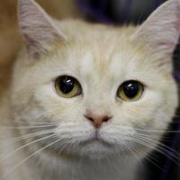 Adopt A Pet :: Sunrise - Huntingdon, PA