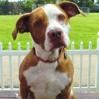 Terrier (Unknown Type, Small)/Border Collie Mix Dog for adoption in Louisville, Ohio - Kane