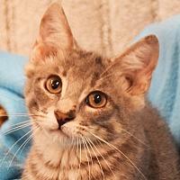 Adopt A Pet :: Plum - Huntley, IL
