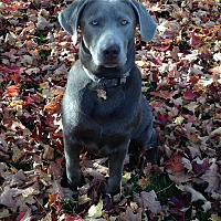Adopt A Pet :: AXEL - Littleton, CO