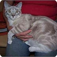 Adopt A Pet :: CRYSTAL - Diamond Bar, CA
