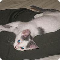 Adopt A Pet :: Katy - Harriman, NY