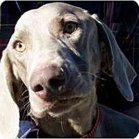 Adopt A Pet :: Grapefruit  **ADOPTED** - Eustis, FL