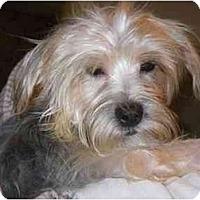 Adopt A Pet :: Drew - Dayton, OH