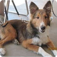 Adopt A Pet :: Jimmy - apache junction, AZ