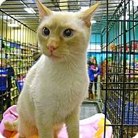 Adopt A Pet :: Fritz - Pittstown, NJ