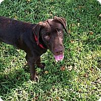 Adopt A Pet :: Tonk--ADOPTION PENDING - Baton Rouge, LA