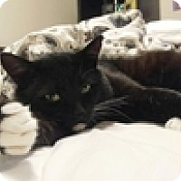 Adopt A Pet :: Sweet Olive - Vancouver, BC