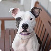 Adopt A Pet :: Lucy - Raritan, NJ