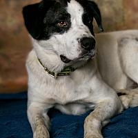 Adopt A Pet :: Buddha - Inglewood, CA