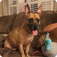 Adopt A Pet :: Cali - Oviedo, FL