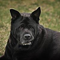 Adopt A Pet :: Ramona - DeSoto, IA