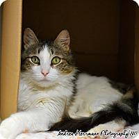 Adopt A Pet :: Haylee - East Hartford, CT