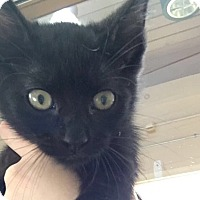 Adopt A Pet :: Ninja - Chula Vista, CA