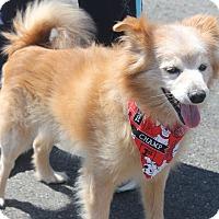 Adopt A Pet :: CHOLO - Clayton, NJ