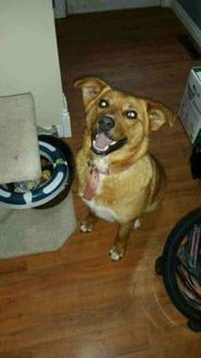 Shepherd (Unknown Type) Mix Dog for adoption in Spruce Grove, Alberta - Roxie