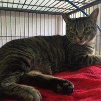 Adopt A Pet :: Kiera - Belleville, ON