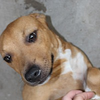 Adopt A Pet :: Tanner - Daleville, AL