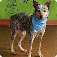 Adopt A Pet :: Jovi - Topeka, KS