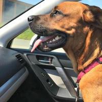 Adopt A Pet :: Wendy - Kansas City, MO