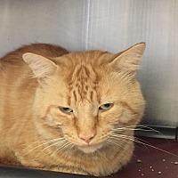 Adopt A Pet :: Sully - Jackson, MI