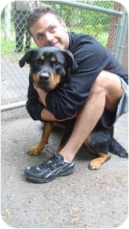 Rottweiler Dog for adoption in BRIDGEPORT, Connecticut - Tara