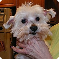 Adopt A Pet :: Chester - Blairstown, NJ