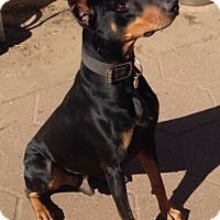 Adopt A Pet :: Sarge - Wichita, KS