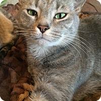 Adopt A Pet :: Simon - Monroe, NC