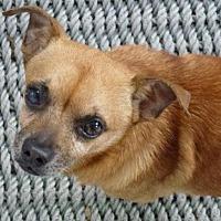 Adopt A Pet :: Bently - Spring Lake, NJ